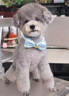 PON・PON --愛犬の友 ヘアスタイルカタログ--