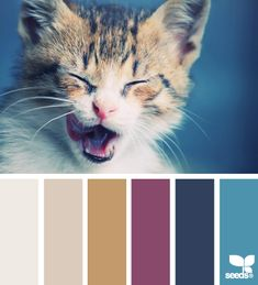 Design Seeds: kitten hues 10.12.13