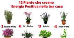 Non tutti tengono le piante in casa soltanto per arricchire e decorare lo spazio. Sapevi che esistono delle piante che sono in grado di migliorare il flusso di energia, purificare l'aria e creare un senso di pace, relax, benessere e felicità all'interno della tua casa? L'eliminazione dell'energia negativa potrà ridurre lo stress, migliorare la salute e ti aiuterà a vivere più momenti di gioia. Queste sono le 12 piante più efficaci nel diffondere energia positiva nella tu...