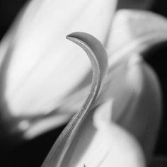 Lily by Treacy-ann Markham on 500px