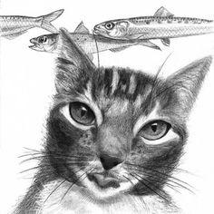 Illustratrice naturaliste & dessin animalier: Félin #2 GUIZMO