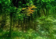 green wood.