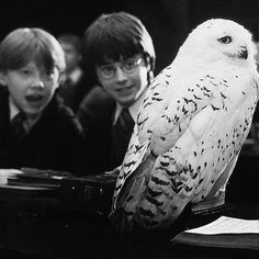 """Try writing """"I love Harry Potter books and movies"""" in the comments with your eyes closed!        #HarryPotter #Harry_Potter #HarryPotterForever #Potterhead #harrypotterfan #jkrowling #HP"""