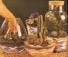 The Fern & Mossery: Vintage Terrarium How-To Guides at the Naughty Secretary Club
