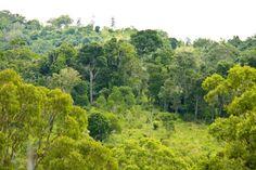 Charilam Wildlife sanctuary - in Tripura, India
