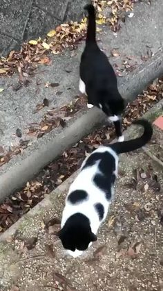 Cute Funny Animals, Cute Baby Animals, Funny Cats, Animals And Pets, Puppies And Kitties, Cute Cats And Kittens, I Love Cats, Dogs, Cute Animal Videos