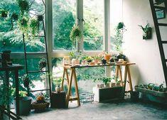 I love plants too.