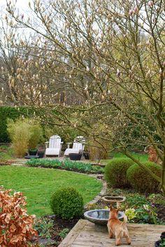 Almbacken: Magnolians knoppar brister