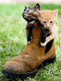 What could be better than a puss in boots? I know! Two puss' in boots!