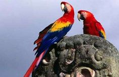 Papagaaien kijken in Honduras   Lees meer over midden amerika op www.wearetravellers.nl/middenamerika