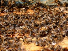 How to Get Rid of Moths From Beehives
