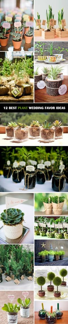 12-Ultimate-Great-Ideas-for-Lovely-Plant-Wedding-Favors.jpg 600×2,840 pixeles