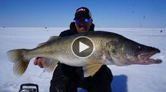 Ice Fishing Monster Walleye's #bassfishing #fisheries #fishingshop #fishingtackleshop #fishinghook #lure #reel #fishingstore #go fishing #walleyefishing #huntingandfishing #bait #tackle #angler #saltwater #baitandtackle #fising #carpfish #shimanofishing #deepseafishing #jig #fishingknots #livebait
