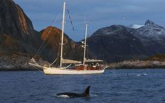 See the whales. Check! Breath-taking, stunning experience. Courtesy of Eagle Wing Tours in Victoria, BC, August 2013.