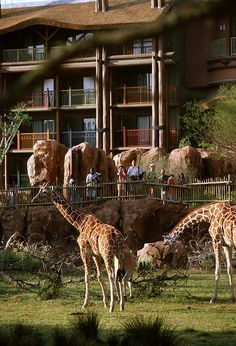 Disney's Animal Kingdom Lodge, Walt Disney World, FL