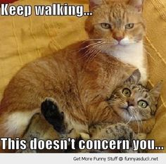 Image detail for -cat lolcat keep walking animal funny pics pictures pic picture image ...