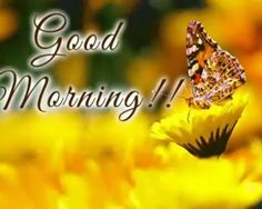 Looking for Beautiful Good Morning images ? Check out collection of Beautiful HD images,photos ,pic's,wishes and Greeting to cards. best good morning top images | Your Good Morning stock images are ready.Download all free of royalty-free photos and vectors.use them in commercial design's under photos. best good morning images | Our proud new collection of Good Morning images is here to add that refreshing touch to the starting of our day. #good_morning #good_morning_wishes…