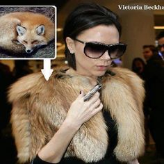 "International Anti-Fur Coalition~To all the FUR HAGS : simple question. ""Why would anyone want to sponsor cruelty & be an icon of death? Why would anyone like to promote slaughter, selfishness, ignorance and arrogance?"" The Fur industry spends millions beautifying fur, trying  to hide the reality which is of course the animal pain & misery, the barbaric traps, the mutilations, the blood & the skinned bodies of once gorgeous animals. She looks repulsive!"