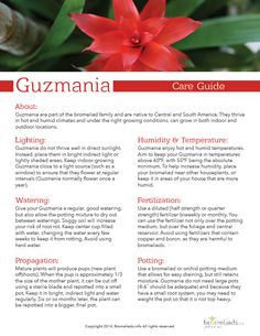 FREE #Guzmania Care Guide #bromeliads #tips #plants