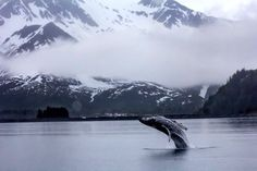 Sometimes a photo just screams wow. Here a Humpback Whale shows us how to be the center of attention in Kenai Fjords National Park in Alaska. Photo: Ashley Lindley