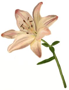 Lily Flower Drawing step by step Calvin Und Hobbes, Flower Drawing Tutorials, Drawing Tutorials For Beginners, Flower Step By Step, Step By Step Drawing, Drawing Skills, Drawing Lessons, Art Floral, Lilies Drawing