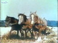MIKIJEVA RADIONICA - Konji (Part 2) SINHRONIZOVANI CRTANI FILMOVI - http://filmovi.ritmovi.com/mikijeva-radionica-konji-part-2-sinhronizovani-crtani-filmovi/