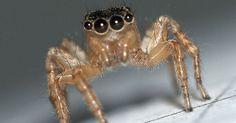 9 astuces naturelles pour lutter contre les araignées de votre maison.  Voici des astuces de grand-mère pour repousser les araignées de votre maison sans les tuer. Fini la peur de l'araignée et les toiles au plafond !