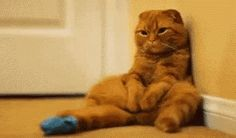 I love cat gifs and dog gifs. Funny Cats, Cute Cats, all the time.Big animals gif lover too. Cute Cats, Funny Cats, Funny Animals, Cute Animals, Animal Gato, Cat Scottish Fold, Sad Cat, Sad Kitty, Kitty Gif