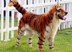 Decálogo: Diez perros disfrazados de Halloween - Son Cosas Mías!