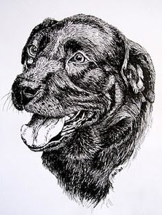 Labrador (Pen & Ink, A4)