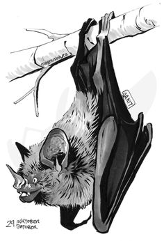 just a red dragon drawing Animal Sketches, Animal Drawings, Art Drawings, Creatures Of The Night, Cute Creatures, Draculaura, Bat Animal, Animal Graphic, Vampire Bat