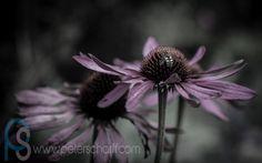 Summer slips away. Flowers, Plants, Summer, Photography, Summer Time, Photograph, Summer Recipes, Photography Business, Flora