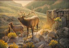 """Glowing Echoes"" Elk painting by Greg Alexander"