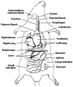 Vesalius Clinical Folios: Microsurgery: Inguinal