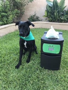 Nash, the bioDOG is promoting and asking all dog owners to adopt dog waste composting as bioDOGradable bags are 100% Home Compostable with the bioCOMpet Pet Waste Composter. Contact us for more information about how to compost pet waste in your backyard. #composting #compostable #dogwaste #poop # backyardcomposting #homecomposting #renewable #biobased #wastedisposal #zerowaste #pets #dogs #cats #gogreen
