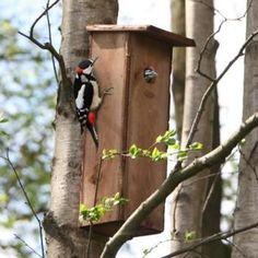 Nestkast x 16 x 55 cm - Kwekersvergelijk Garden Projects, Wood Projects, Modern Birdhouses, Nature Words, Bug Hotel, Esschert Design, Bird Houses Diy, Bird Boxes, Nesting Boxes