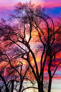 ✮ A colorful sunset sky behind large lit trees with white Christmas lights
