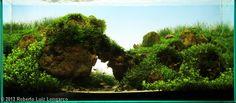 Planted Aquarium Pictures: Photo