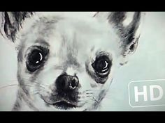 speed drawing realistic dog (chihuahua) || Gotta draw 2 of these using this video as a shading reference. Wish me luck!