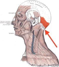 Wenn du diesen Punkt an deinem Nacken berührst, passiert mit deinem Körper etwas Außergewöhnliches.