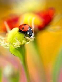 myata: Ladybird by Mandy Disher Photography on Getty Images