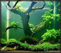 Image Search Results for planted tank christmas moss driftwood