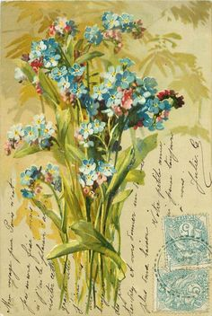 Forget-me-nots postcard, with French handwritten message and 2 stamps, 1904.
