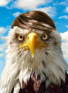 Combover Eagle.     Does it look like Hitler, or more Donald Trump-ish?