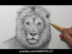 How to Draw a Lion [Narrated, Step by Step] - YouTube
