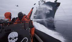 Sea Shepherd repart au combat