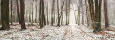 Path into light - This is a panorama shot out of seven single frames taken on a misty winter morning in the woods of northern Germany. This location is new to me as i ddn´t walk around in this area so far. I stopped in this region because the mist was beautiful in this area and so i started to search for the right location and finally ended up at this little forest path. The perfect scene for a panorama shooting. Enjoy it