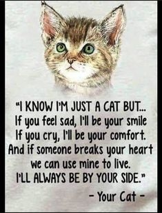 Quotes Friendship Love Lost Ideas For 2019 Cute Cats, Funny Cats, Funny Animals, Funny Cat Videos, Funny Cat Pictures, Crazy Cat Lady, Crazy Cats, Feeling Sad, How Are You Feeling