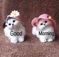 Good Morning Friends Images, Good Morning Happy Sunday, Morning Cat, Good Morning Picture, Good Morning Flowers, Good Morning Love, Good Morning Greetings, Good Morning Quotes, Beautiful Morning Pictures