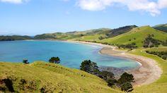 Port Jackson, Coromandel New Zealand